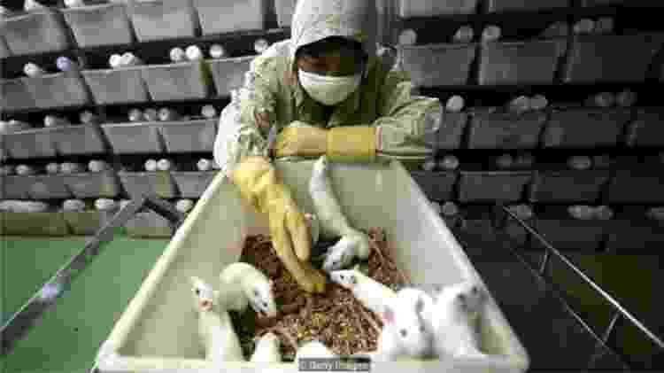 Os 'corpos em um chip', que imitam a fisiologia humana, podem testar os efeitos de novas drogas, substituindo animais de laboratório - Getty Images
