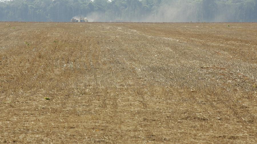 Fronteira entre área agrícola e floresta amazônia em Mato Grosso - Bruno Domingos