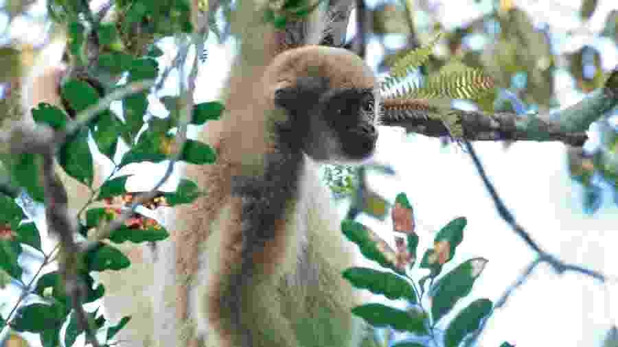 Macaco foi apelidado de Chico - Luciano Candisani