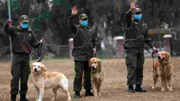 Cães policiais - Chile - Marcelo Hernández/Getty Images - Marcelo Hernández/Getty Images