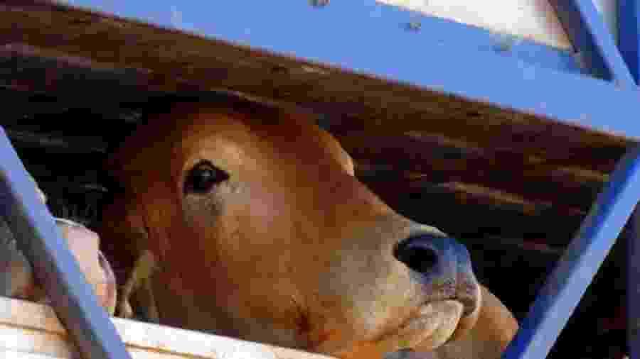 Relato de caminhoneiro revela que a JBS transferiu animais de uma fazenda com multa de R$ 2,2 milhões do Ibama - Repórter Brasil