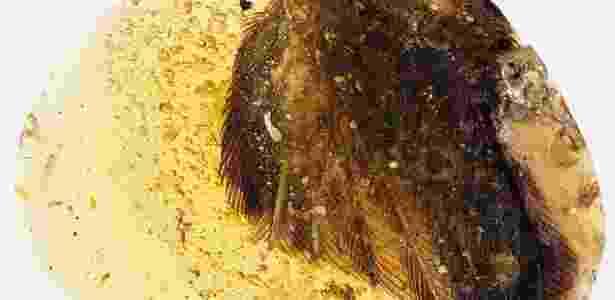 Âmbar com a ponta da asa de um pássaro preservada - Xinhua