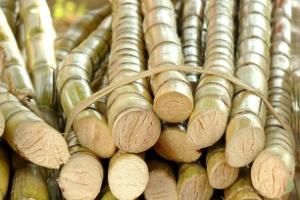 Puxado pela safra da cana-de-açúcar, AL lidera empregos no país em outubro (Foto: istockphoto)