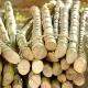 Puxado pela safra da cana-de-açúcar, AL lidera empregos no país em outubro - istockphoto