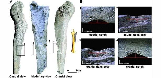 Imagem mostra (à esq.) três diferentes locais de impacto onde ossos de animais teriam sido fraturados por ferramentas humanas. Também é possível ver (à dir.) os entalhes e cicatrizes ampliados para análise