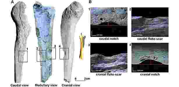 Imagem mostra (à esq.) três diferentes locais de impacto onde ossos de animais teriam sido fraturados por ferramentas humanas. Também é possível ver (à dir.) os entalhes e cicatrizes ampliados para análise - Reprodução