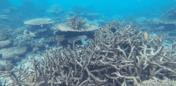 Grande Barreira de Corais está sofrendo branqueamento por causa do aquecimento global - Greg Torda, ARC Centre of Excellence for Coral Reef Studies