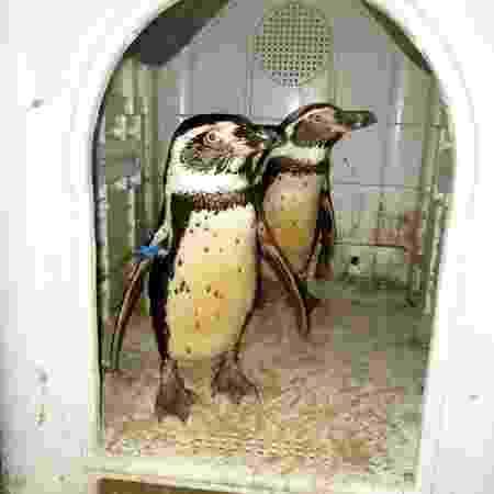 Dois pinguins foram roubados e vendidos pelo Facebook por R$ 66 mil - Divulgação