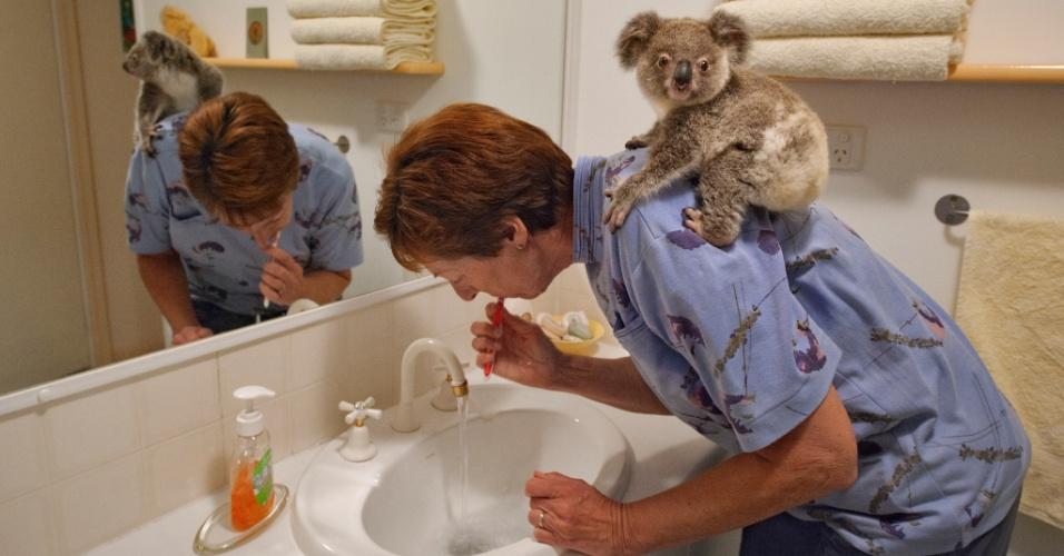 13.out.2015 - Na estação de conservação em Queensland, Austrália, a cuidadora Anika Lehmann afirma que Talisa, uma coala fêmea resgatada, será devolvida a natureza