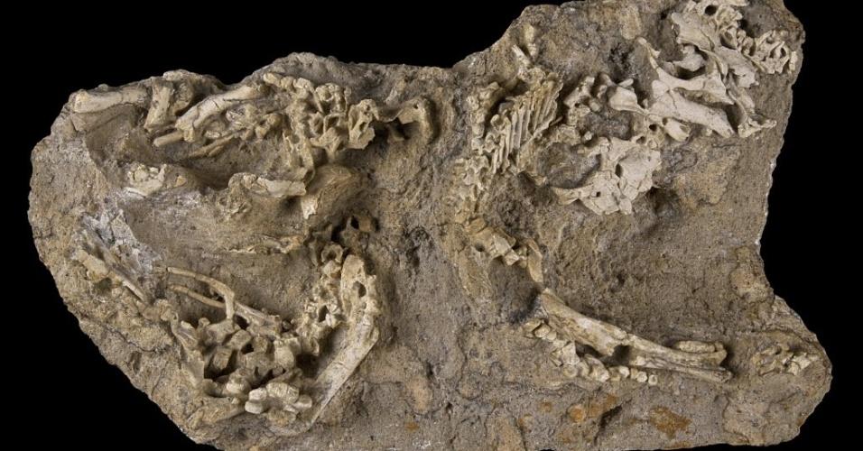 Ao menos três esqueletos de dinossauros ainda no ovo ou pouco após a eclosão no momento da morte foram descobertos na região chamada