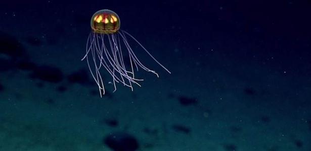 Muitos cientistas argumentam que as populações de águas-vivas estão aumentando