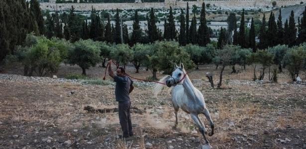 Tradição une arábes e israelenses na Palestina