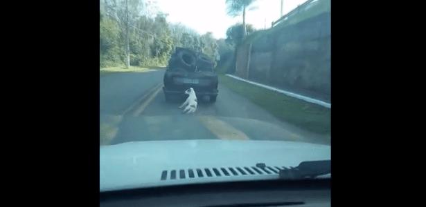 Cachorro pula de caminhonete e acaba arrastado em rodovia de SC - Reprodução