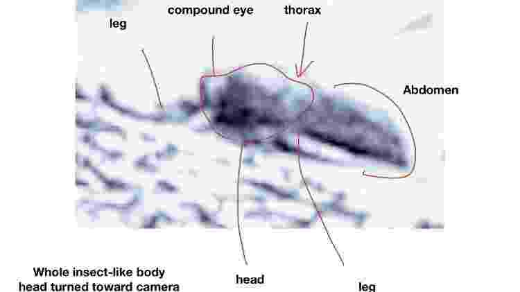 Professor avaliou técnicas de composição de imagem para identificar formas similares a insetos ou répteis em fotos da Nasa. - Divulgação/Universidade de Ohio