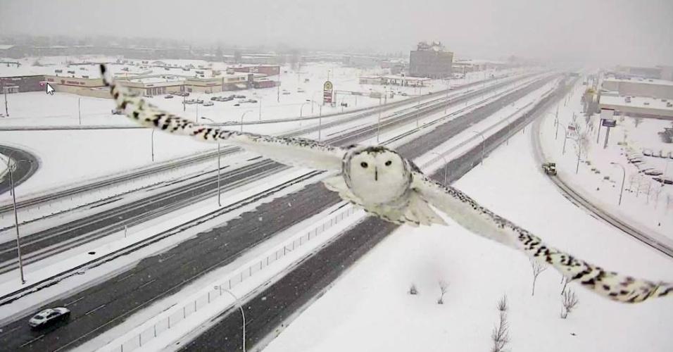 7.jan.2016 - O ministro dos Transportes de Québec (Canadá), Robert Poëti, compartilhou imagens de uma coruja branca em pleno voo. As imagens foram capturadas por uma câmera de trânsito a oeste de Montreal. Poëti afirmou que as imagens da coruja foram tiradas no dia 3 de janeiro. Embora a coruja seja considerada o pássaro oficial do Québec, é raro avistá-las na região