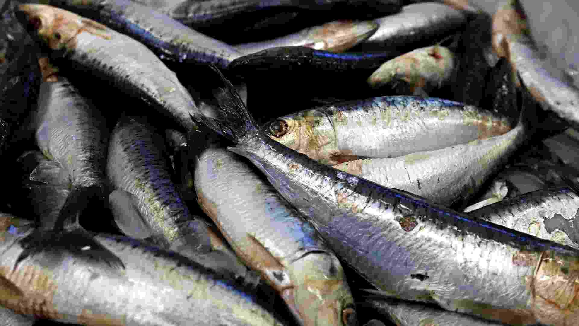 Pesca de sardinha em Itajaí (Santa Catarina) - Lucas Amorelli/UOL