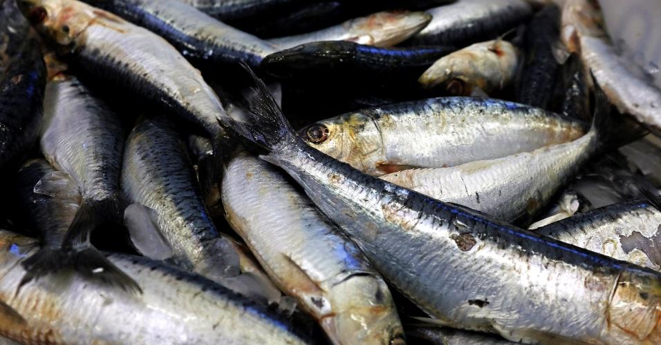 Pesca de sardinha em Itajaí (Santa Catarina)