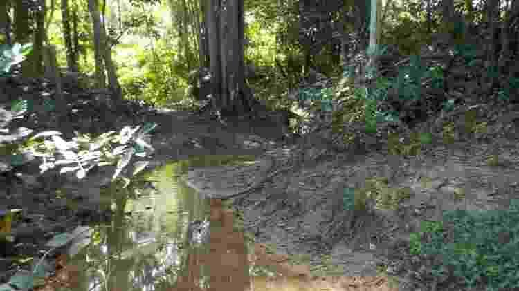 Pesquisadores analisaram peixes em 12 locais nas bacias do rio Guamá e do Acará-Capim, no Pará - Labeco/UFPA - Labeco/UFPA