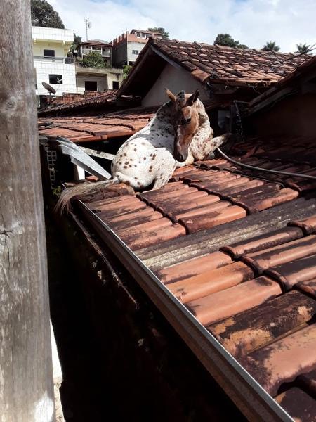 Resgate do animal foi feito pelos próprios funcionários da prefeitura - Prefeitura de Aricanduva/Divulgação