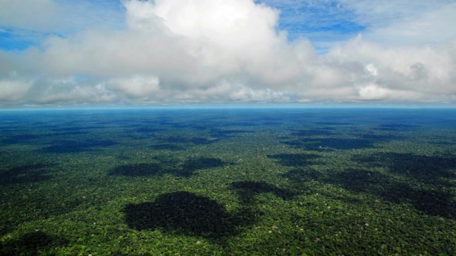 floresta amazônica - Wikimedia Commons