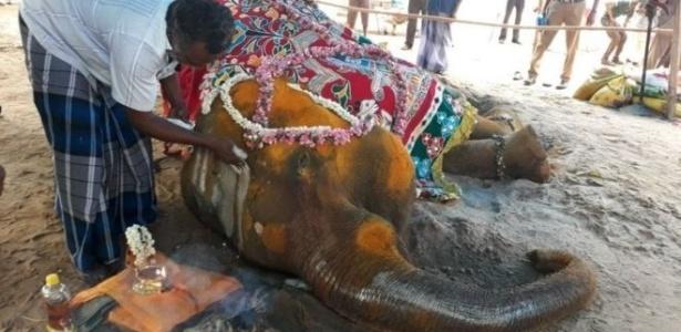 A elefante Rajeshwari morreu apenas dias depois que um defensor de animais conseguiu permissão para sacrificá-la em um tribunal - AFP