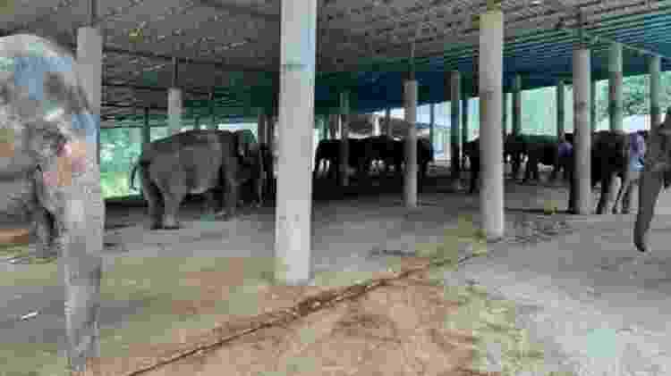 Algumas das fêmeas correndo o risco de morrer de fome estão grávidas - Save the Elephants
