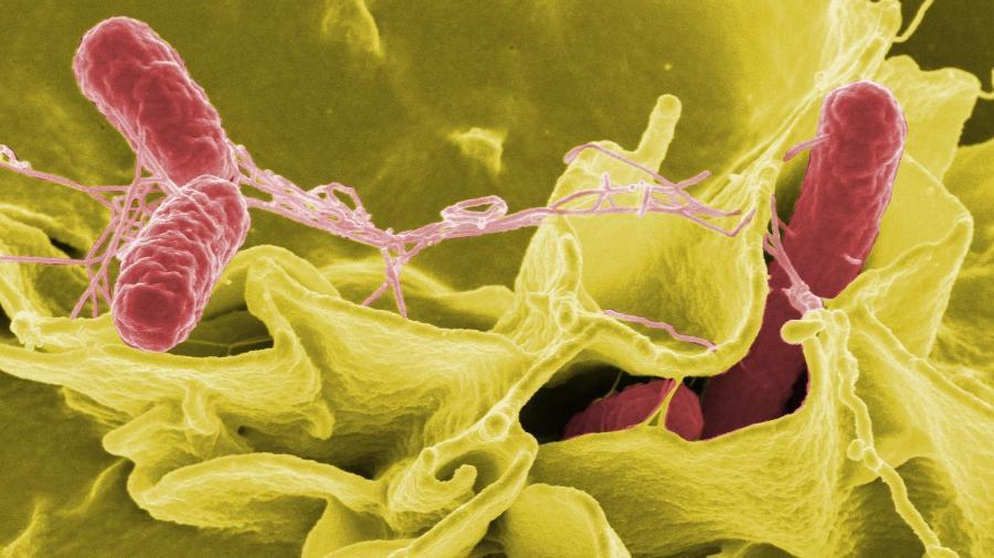 O surto já infectou cerca de 280 pessoas e mais de 20 precisaram de internação hospitalar - Reprodução/Wikipedia/Rocky Mountain Laboratories/NIAID/NIH