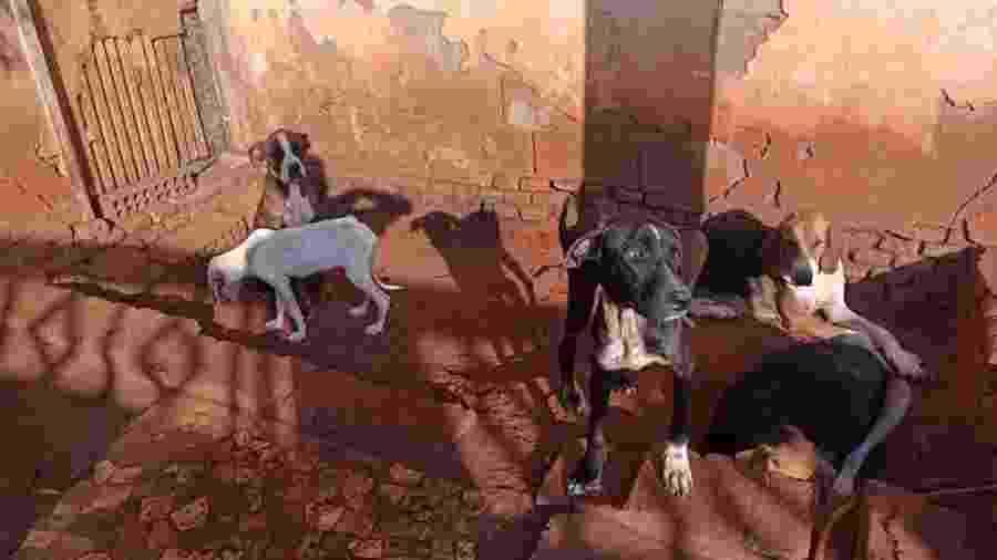 Os 39 cães foram encontrados em situação de maus-tratos, no interior de São Paulo - Acervo Pessoal/Kelsen Arioli