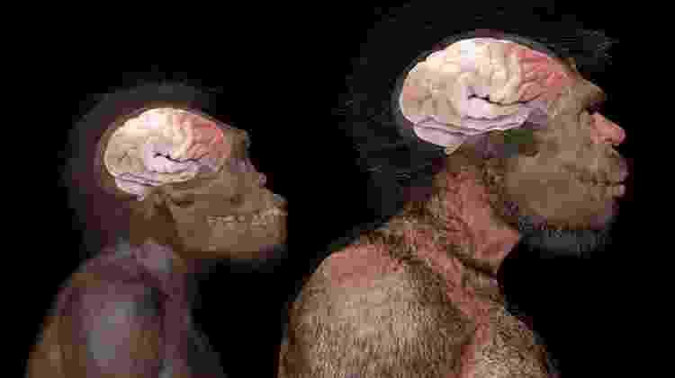 Comparação do tamanho do cérebro do Nomo naledi (espécie extinta) e do Homo sapiens, de acordo com fósseis encontrados em Jebel Irhoud, no Marrocos - Science Photo Library - Science Photo Library