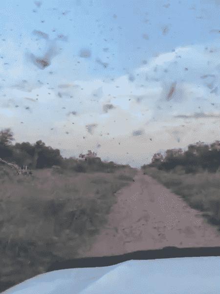 Nuvem de gafanhotos que está no Paraguai se moveu em direção à Argentina - Reprodução/Twitter