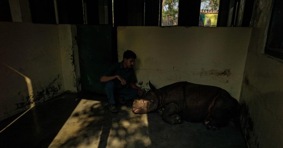 """24.mar.2016 - Filhote de rinoceronte é ferido após ataque de tigre. A foto está entre as imagens feitas pelo fotógrafo brasileiro Érico Hiller para seu livro """"A Jornada do Rinoceronte"""". Hiller diz que quer conscientizar a população sobre a prevenção das cinco espécies de rinocerontes que ainda são encontradas no planeta e, consequentemente, oferecer ferramentas de informação e educação para aqueles que ainda consomem os chifres destes animais na Ásia"""