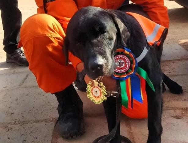 O cachorro Luck, 15, da raça labrador, ganha medalha após se aposentar do Grupo de Busca e Salvamento do Corpo de Bombeiros do Rio Grande do Sul