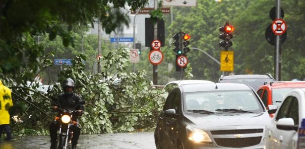 Queda de árvore obstrui parte da rua Vergueiro, na região do bairro Paraíso