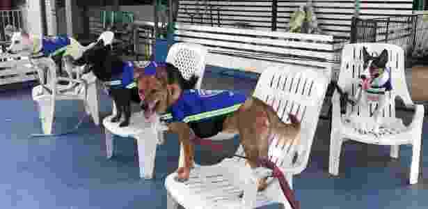 Na Tailândia, alguns cachorros usam um colete inteligente com uma câmera de vídeo escondida - Juarawee Kittisilpa/Reuters - Juarawee Kittisilpa/Reuters