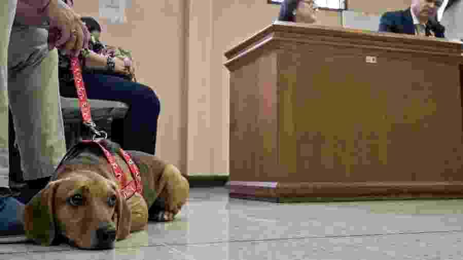 """22.jul.2019 - Cachorro chamado """"Campeão"""" foi o primeiro animal na América Latina a assistir como vítima de maus-tratos ao julgamento de sua ex-dona, na Costa Rica - Ezequiel Becerra/AFP"""