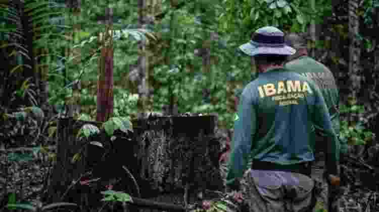 Grupo de trabalho do Ministério Público Federal e do Ibama realizou mais 2,5 mil ações judiciais contra o desmatamento, mas nenhuma com sentenças definitivas - FELIPE WERNECK/IBAMA