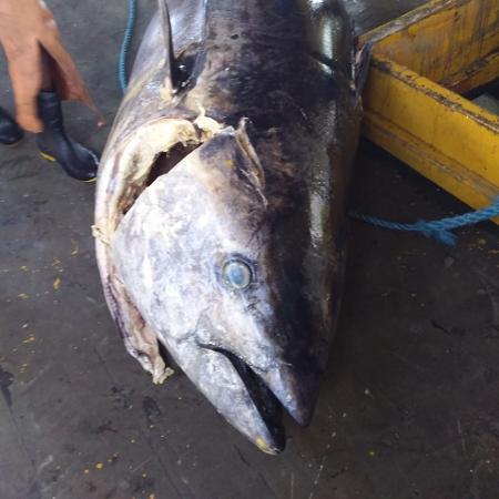 Como permaneceu 15 dias na embarcação, o atum perdeu valor para ser vendido - Arquivo Pessoal
