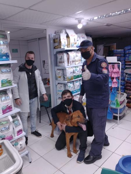 Alemão, cão de família gaúcha, é salvo após manobra de Heimlich feita pelos bombeiros militares - Arquivo pessoal