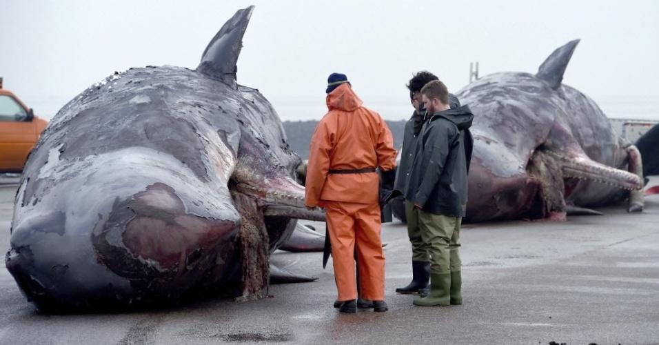 14.jan.2016 - Homens observaram duas baleias mortas no porto de Nordstrand, na Alemanha. Os peritos vão determinar as causas da morte destes dois mamíferos que apareceram na costa