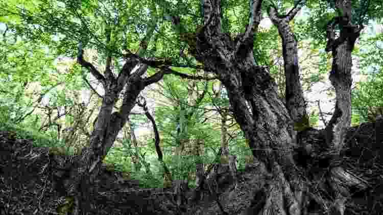 O Irã também abriga patrimônios naturais, como as Florestas da Hircânia - Getty Images