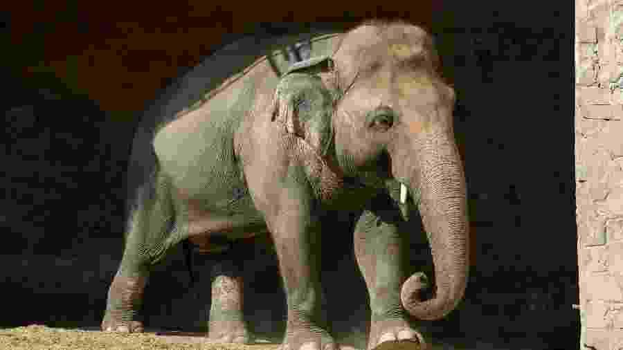 Kaazan está livre e já conheceu outros de sua espécie no santuário - DIVULGAÇÃO/FOUR PAWS