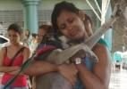 Divulgação/SOS Amigo dos Animais