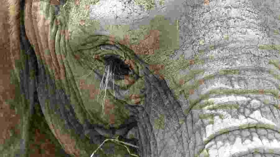 """O elefante, conhecido popularmente como """"Voortrekker"""", era parte de um rebanho raro adaptado ao deserto de Ugab - Reuters"""