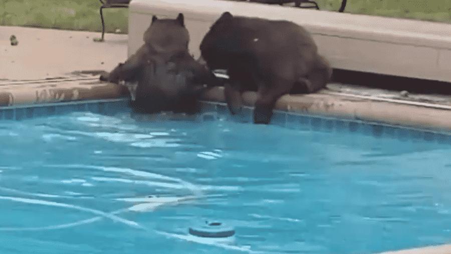 Interação entre ursos e humanos ficam mais comum nessa época do ano - Reprodução/Twitter