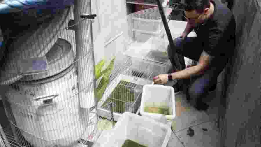 Polícia Civil resgata animais silvestres mantidos em cativeiro no Paraná - Divulgação/Polícia Civil do Paraná