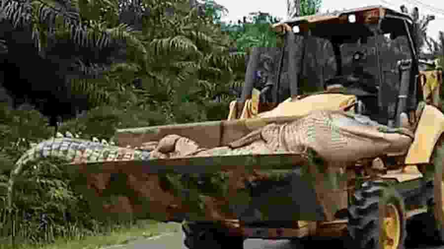 """Crocodilo apelidado de """"Demônio"""" foi morto e decapitado; autoridades constataram que ele não tinha dentes - ViralPress/Via The Sun"""