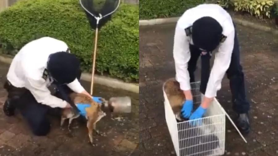 Raposa com garrafa de plástico na cabeça é resgatada por oficial Nick Jonas, da RSPCA (Sociedade Real de Prevenção à Crueldade Animal) - Reprodução/Facebook/TheIndependent