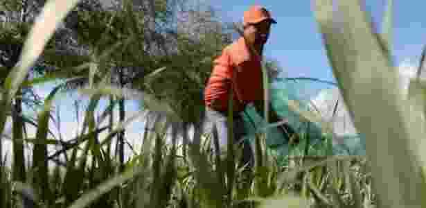 Muitos dos que coletam os insetos não são donos das terras - BBC - BBC