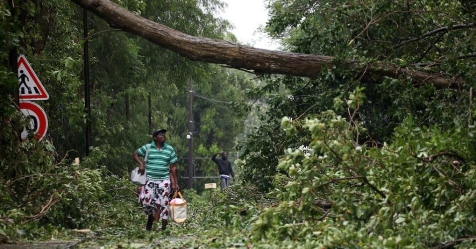 19.set.2017 - Homem observa árvore caída em rua após a passagem do furacão Maria em Pointe-a-Pitre, em Guadalupe
