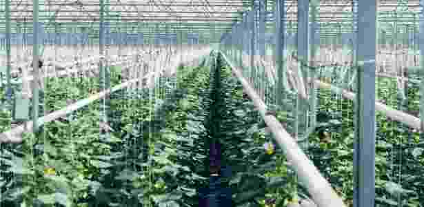 Vendido para uma estufa próxima, gás é usado para cultivar plantas - Climeworks